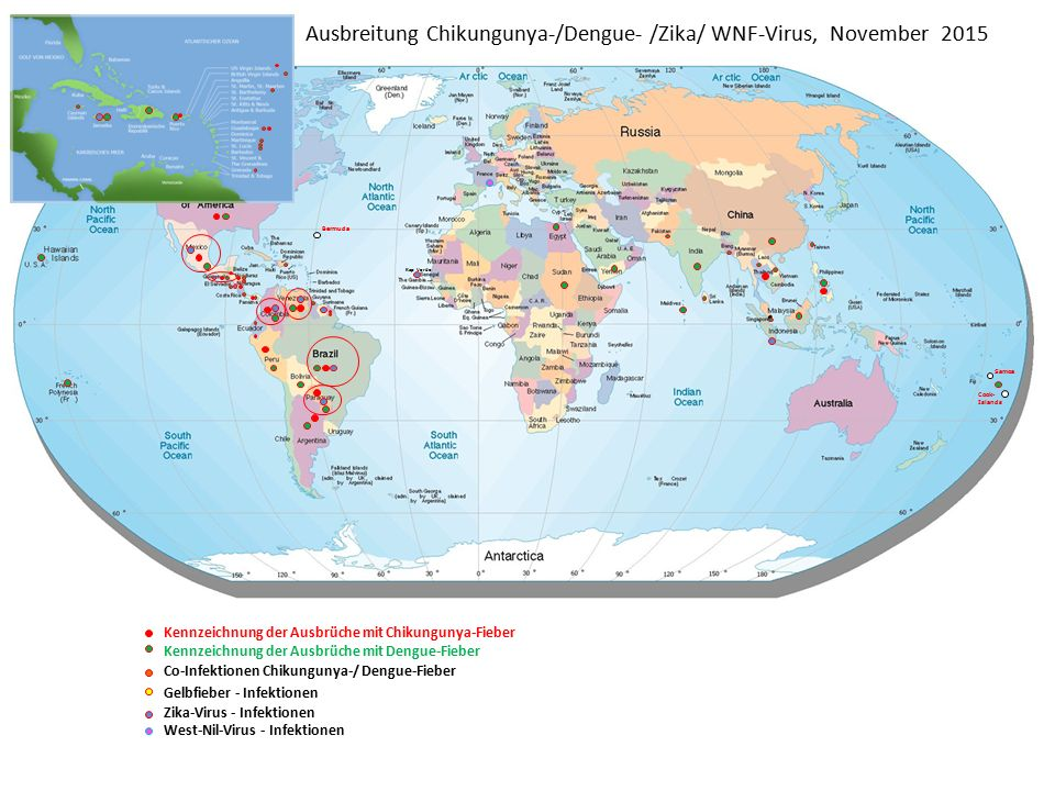 Ausbreitung Chikungunya-/Dengue- /Zika/ WNF-Virus, November 2015
