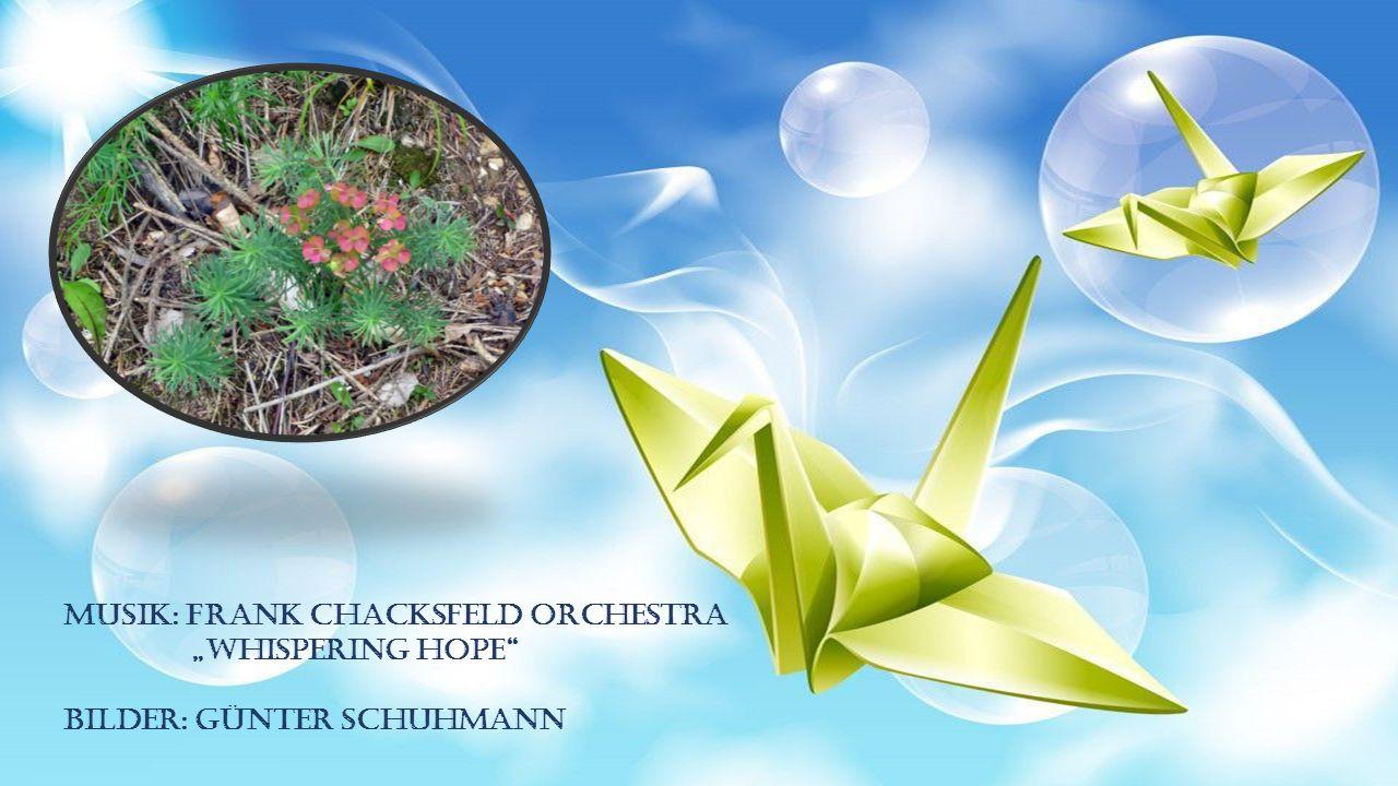 Musik: Frank Chacksfeld Orchestra