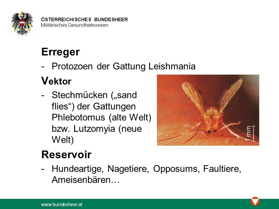 Erreger Vektor Reservoir Protozoen der Gattung Leishmania