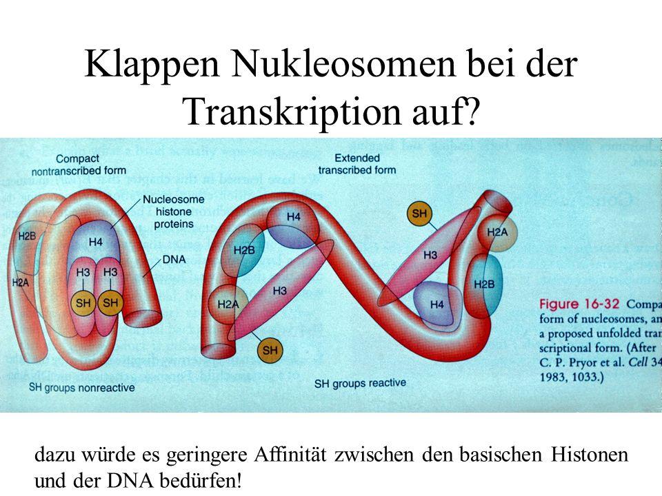 Klappen Nukleosomen bei der Transkription auf