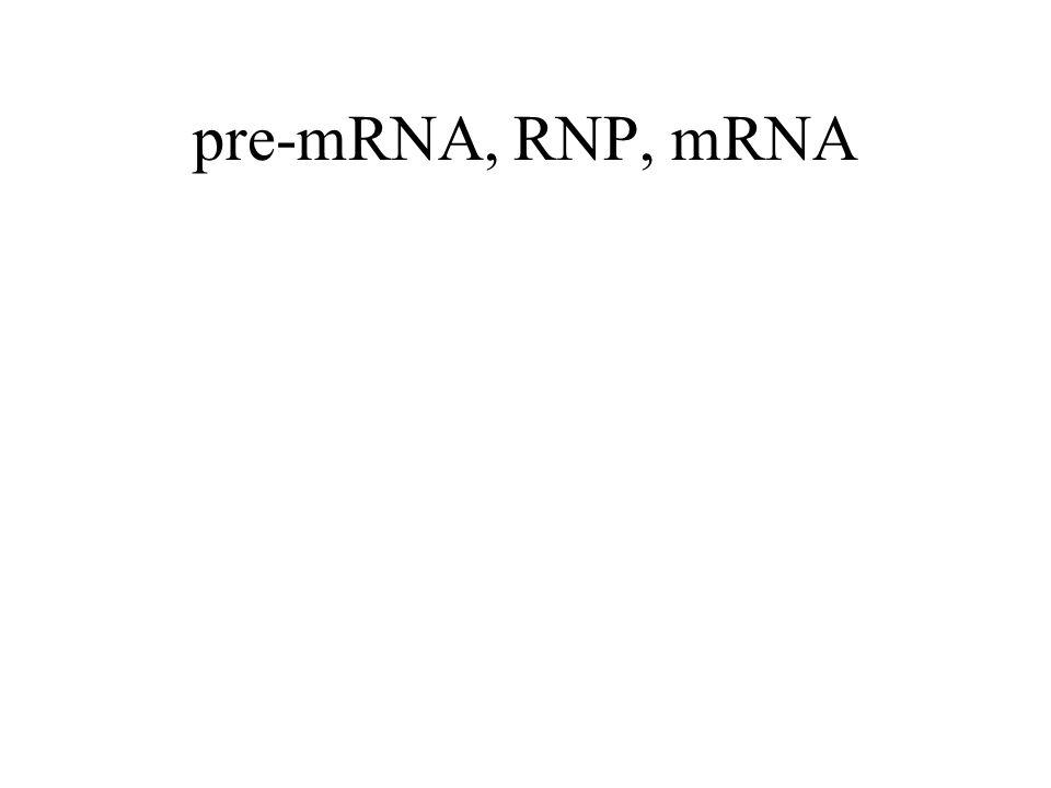 pre-mRNA, RNP, mRNA