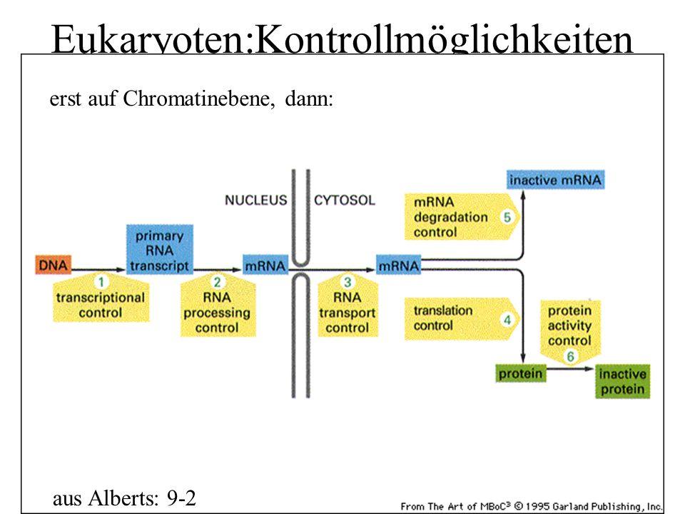Eukaryoten:Kontrollmöglichkeiten