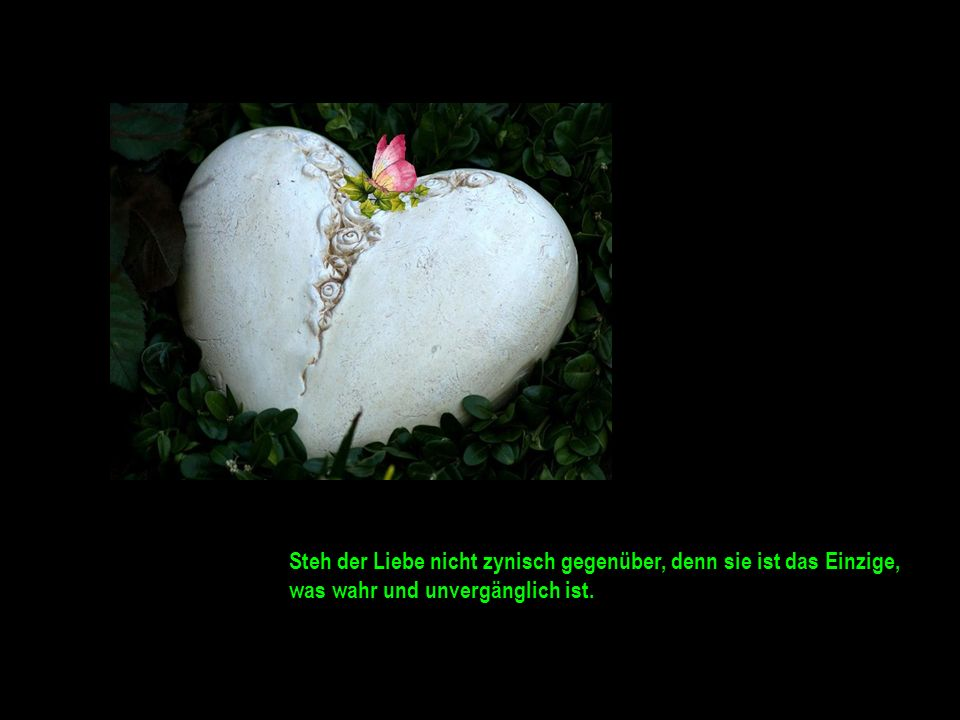 Steh der Liebe nicht zynisch gegenüber, denn sie ist das Einzige, was wahr und unvergänglich ist.
