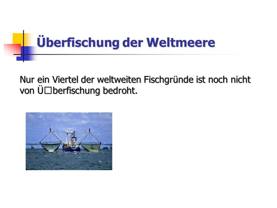 Überfischung der Weltmeere