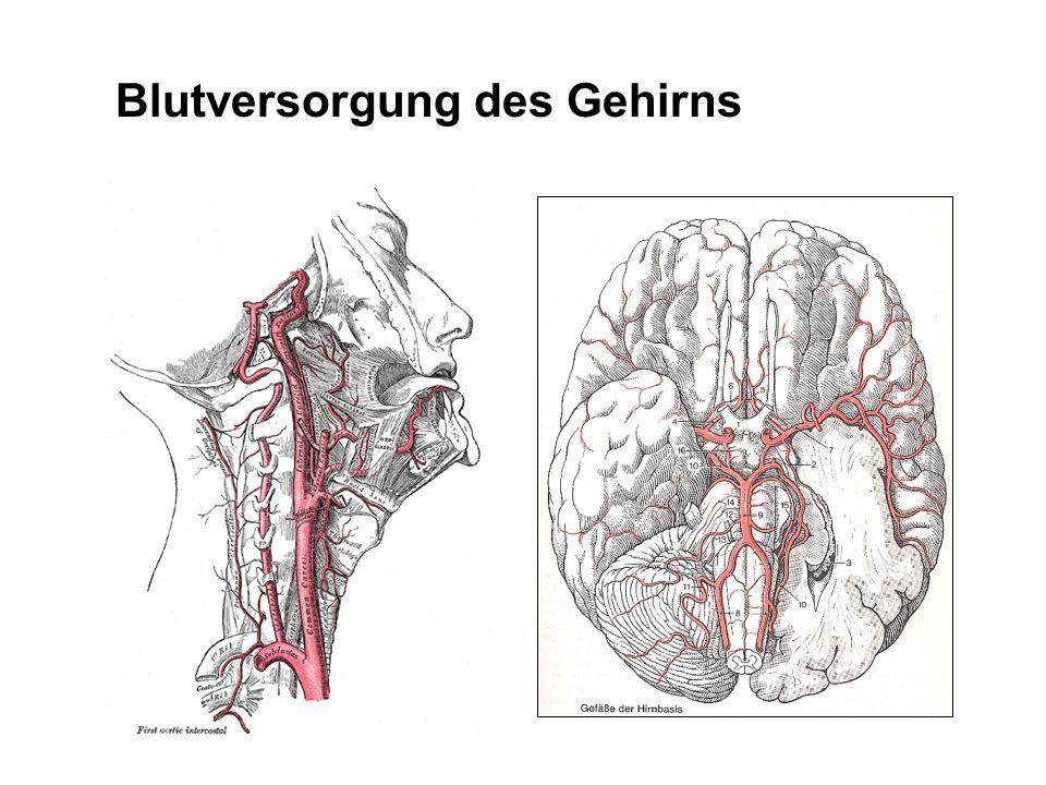 Blutversorgung des Gehirns