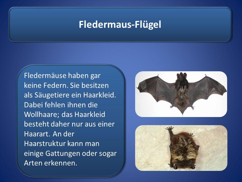 Fledermaus-Flügel