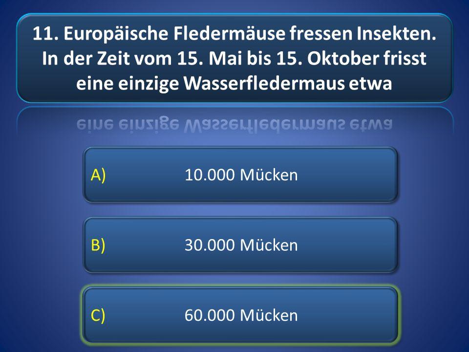 11. Europäische Fledermäuse fressen Insekten. In der Zeit vom 15
