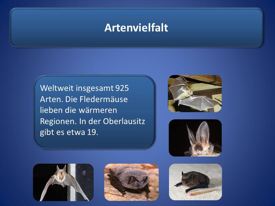 Artenvielfalt Weltweit insgesamt 925 Arten. Die Fledermäuse lieben die wärmeren Regionen.