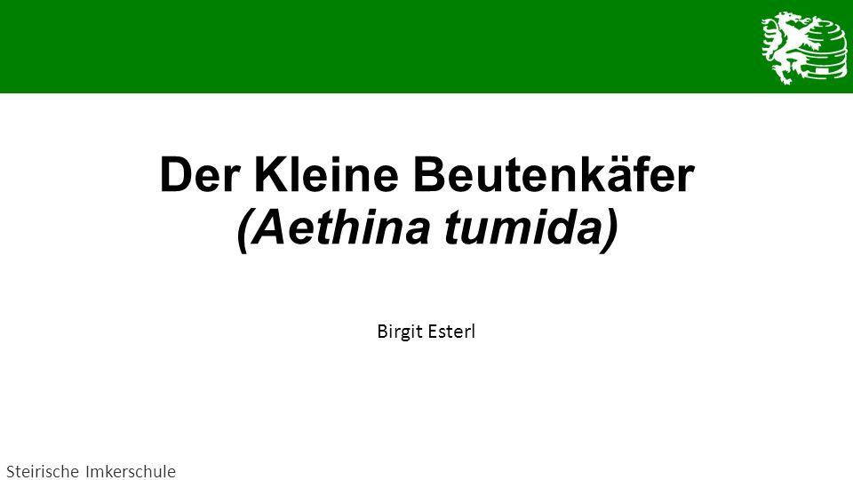 Der Kleine Beutenkäfer (Aethina tumida)