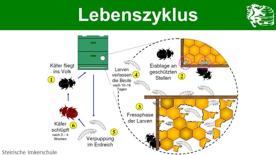 Lebenszyklus Steirische Imkerschule