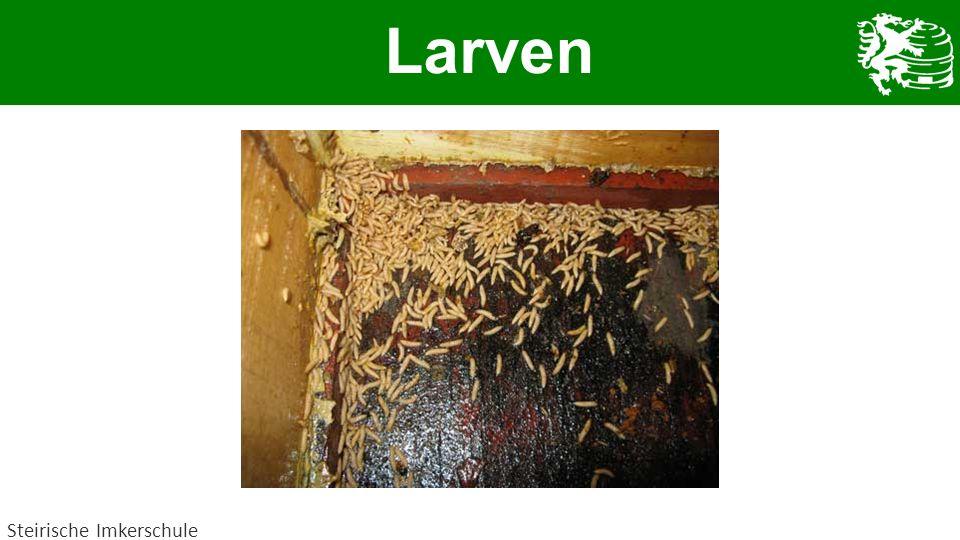 Larven Steirische Imkerschule