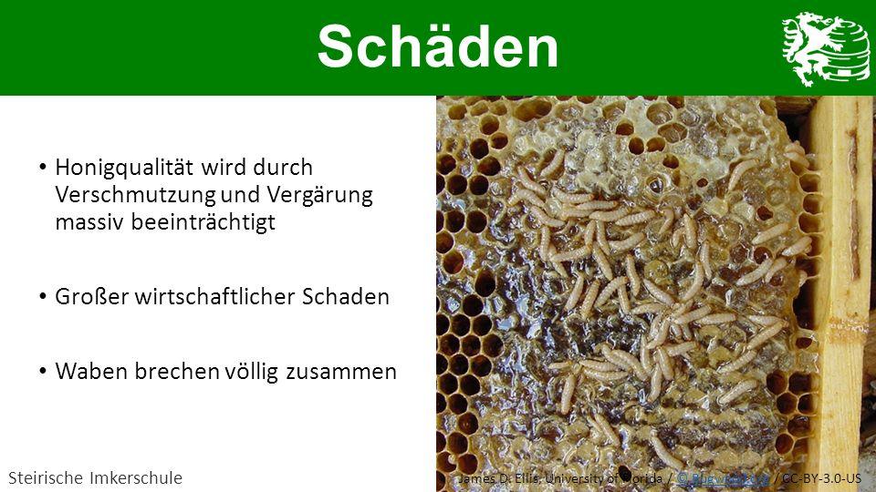 Schäden Honigqualität wird durch Verschmutzung und Vergärung massiv beeinträchtigt. Großer wirtschaftlicher Schaden.