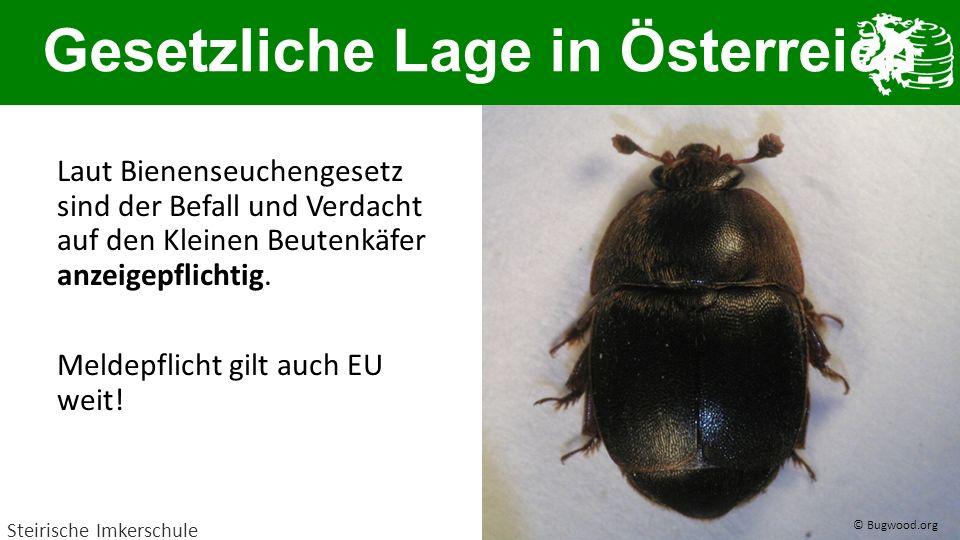 Gesetzliche Lage in Österreich
