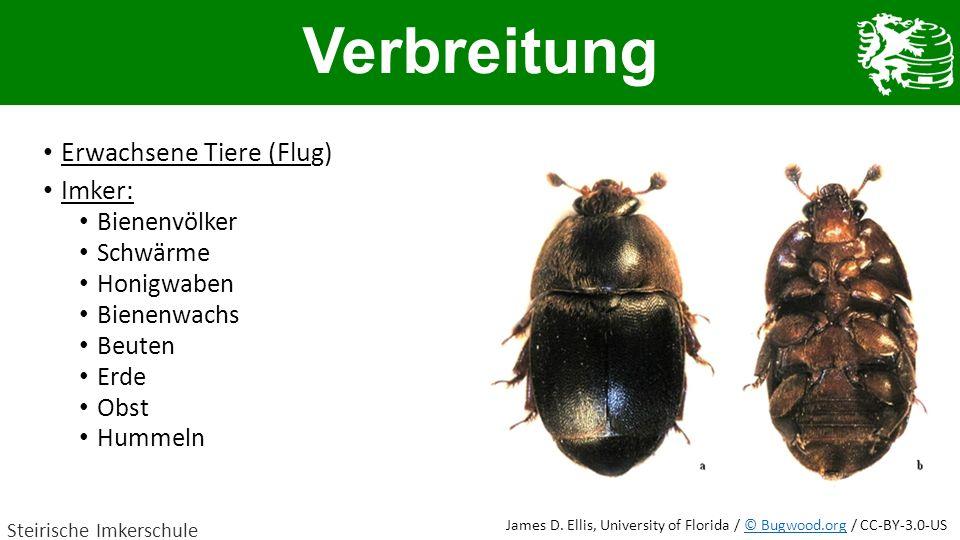 Verbreitung Erwachsene Tiere (Flug) Imker: Bienenvölker Schwärme