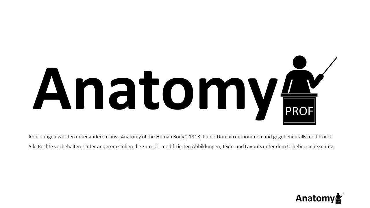 """Abbildungen wurden unter anderem aus """"Anatomy of the Human Body , 1918, Public Domain entnommen und gegebenenfalls modifiziert."""