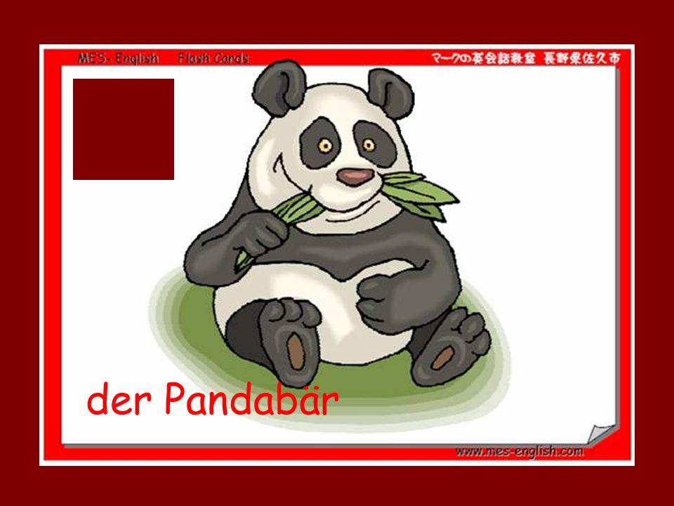der Pandabär