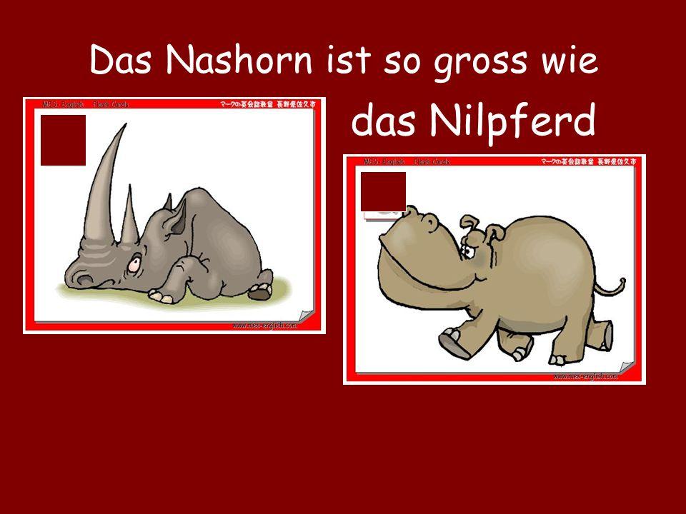Das Nashorn ist so gross wie