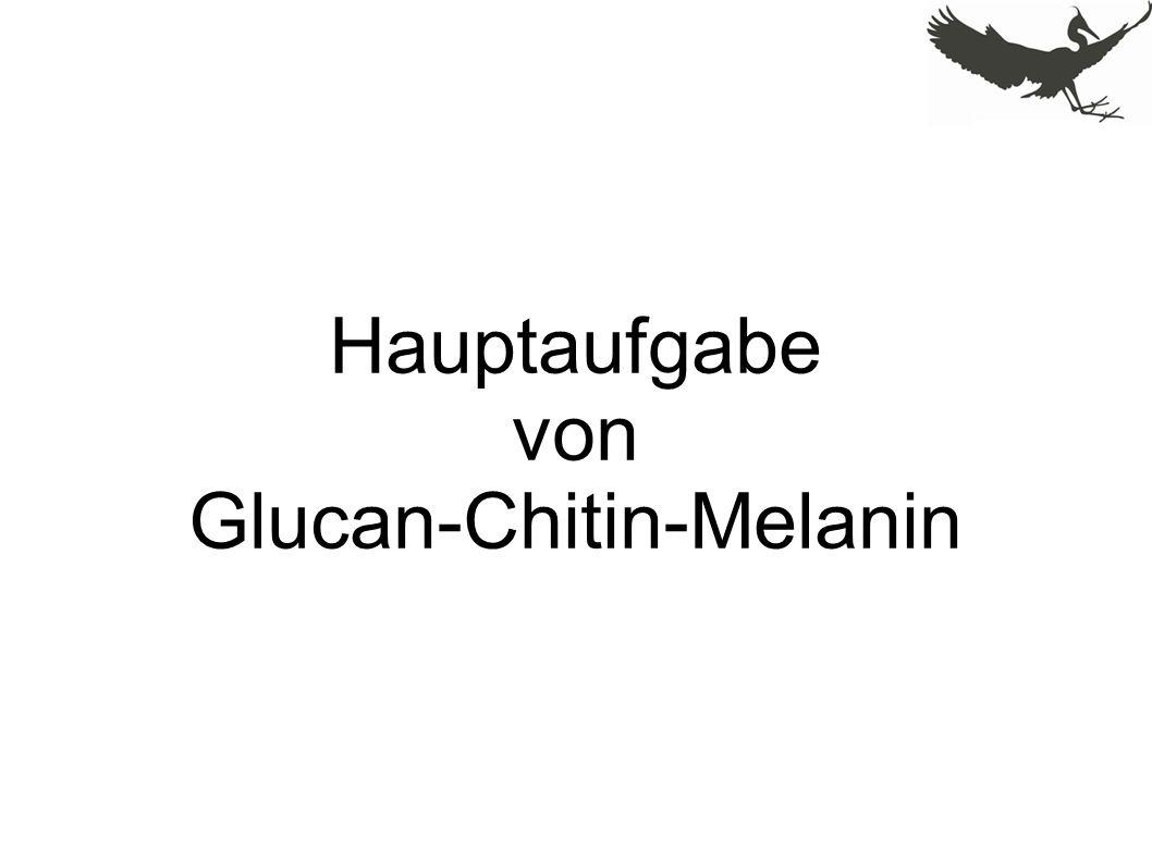Hauptaufgabe von Glucan-Chitin-Melanin