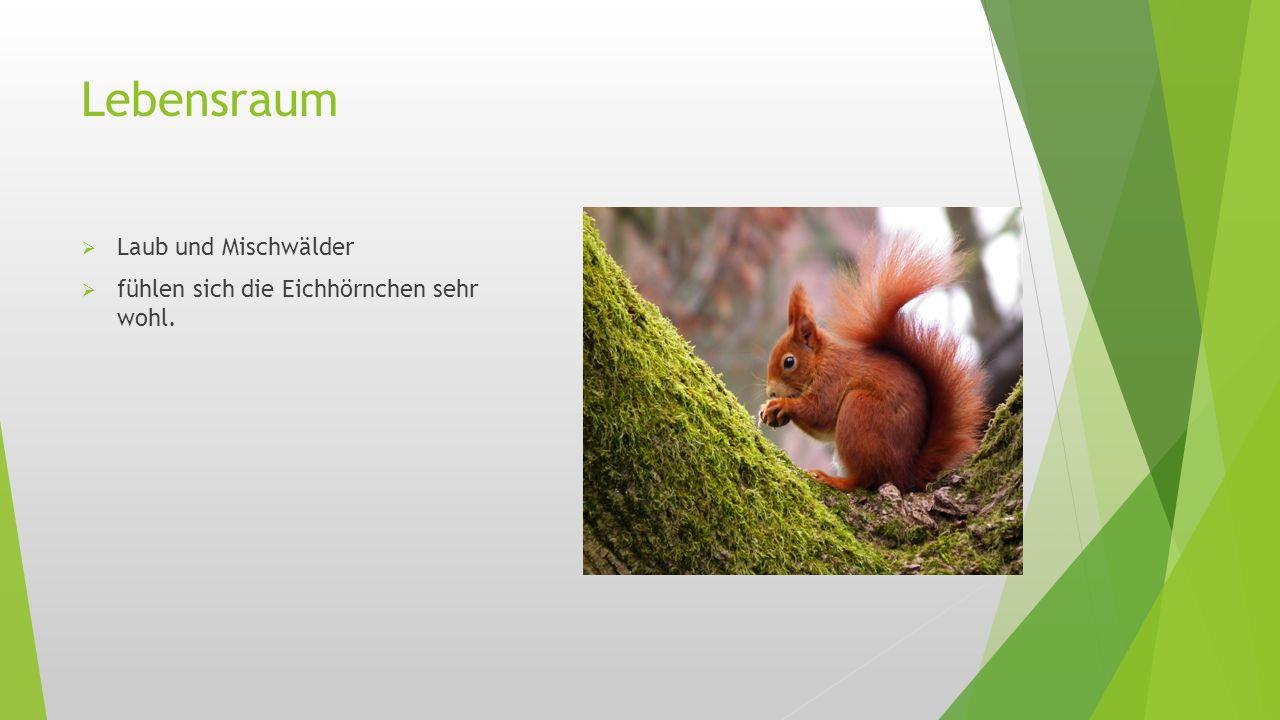 Lebensraum Laub und Mischwälder