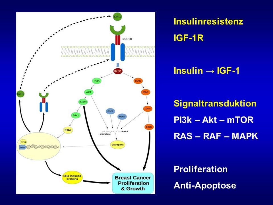 Insulinresistenz IGF-1R. Insulin → IGF-1. Signaltransduktion. PI3k – Akt – mTOR. RAS – RAF – MAPK.