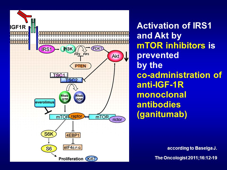 Activation of IRS1 and Akt by mTOR inhibitors is prevented by the