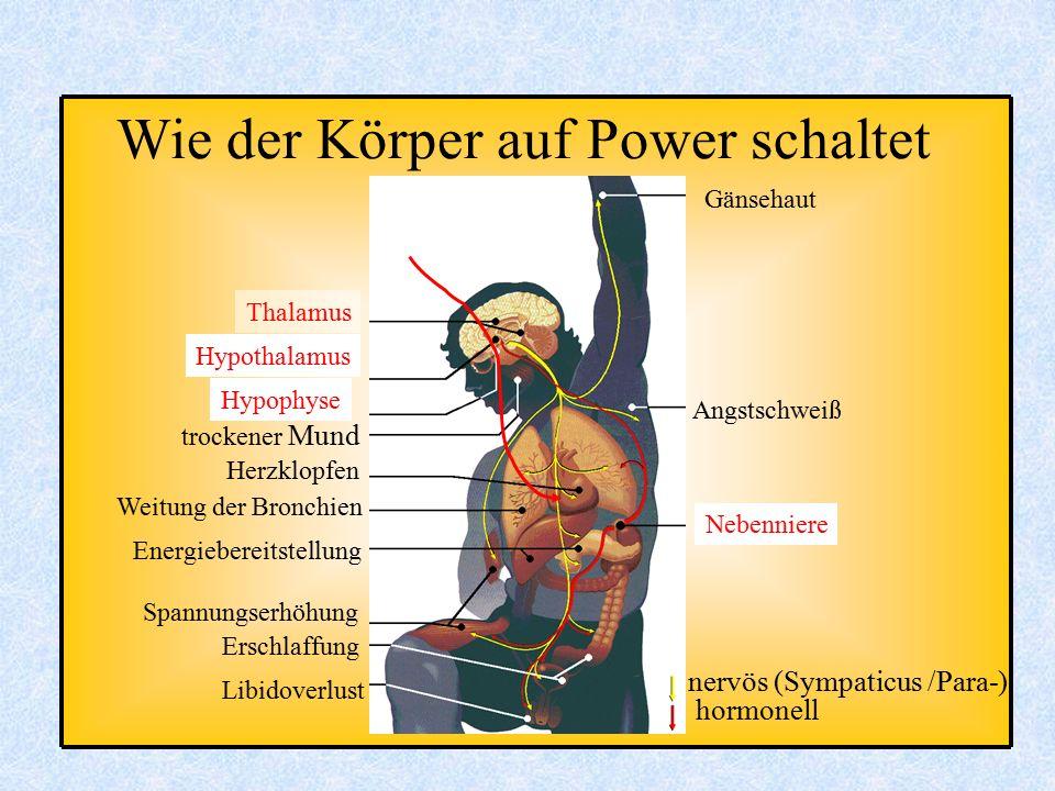 Wie der Körper auf Power schaltet