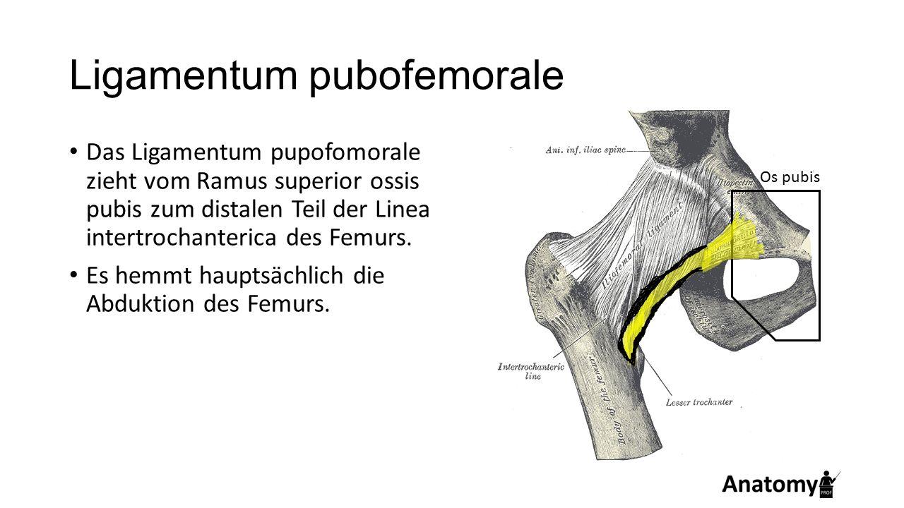 Ligamentum pubofemorale