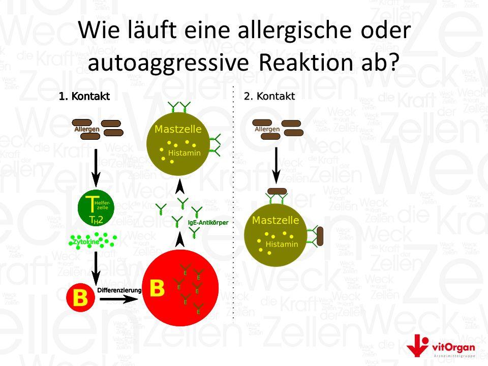 Wie läuft eine allergische oder autoaggressive Reaktion ab