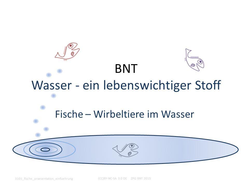 BNT Wasser - ein lebenswichtiger Stoff