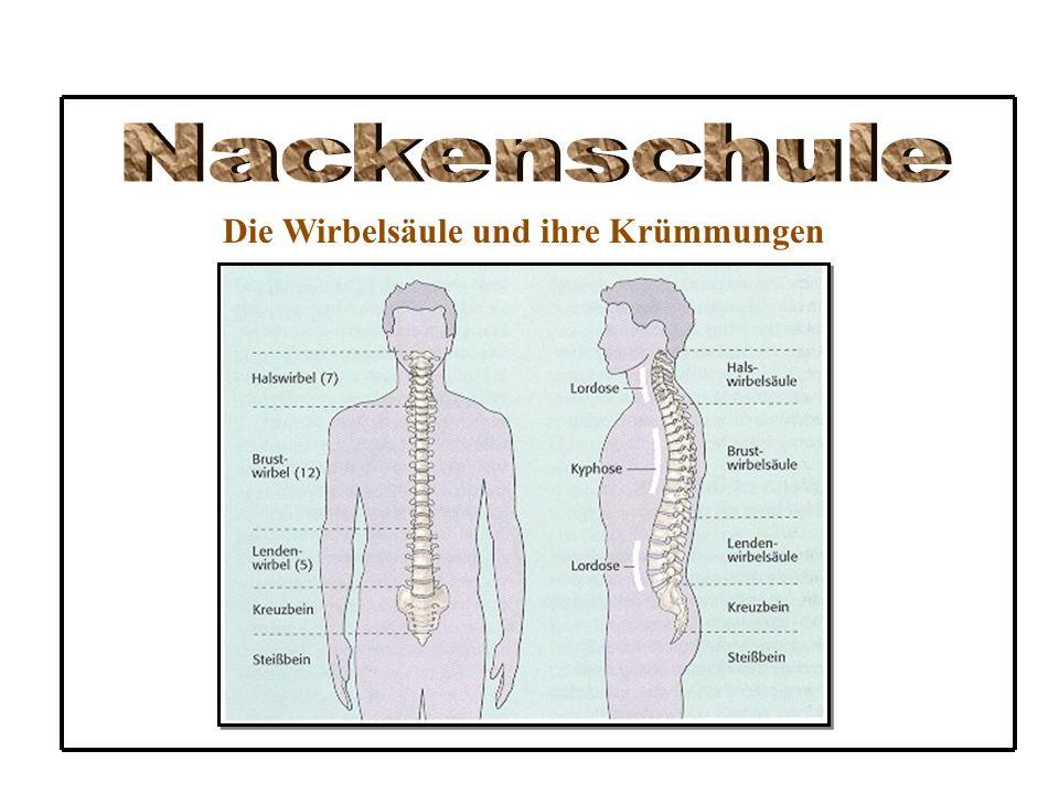 Nackenschule Die Wirbelsäule und ihre Krümmungen