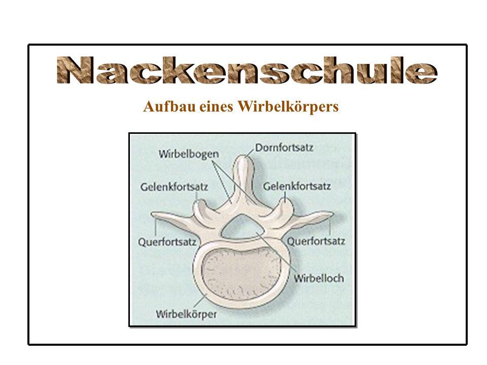 Nackenschule Aufbau eines Wirbelkörpers
