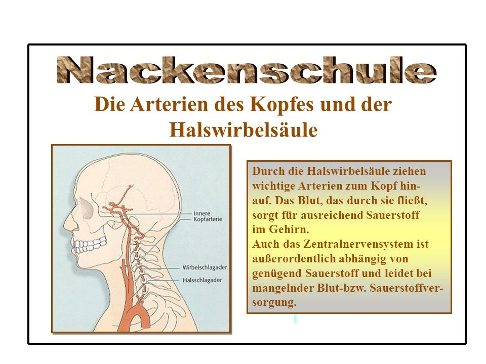 Die Arterien des Kopfes und der
