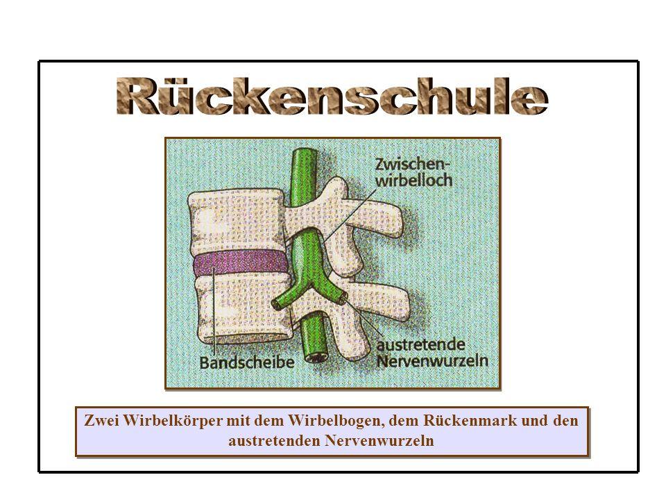 Rückenschule Zwei Wirbelkörper mit dem Wirbelbogen, dem Rückenmark und den.