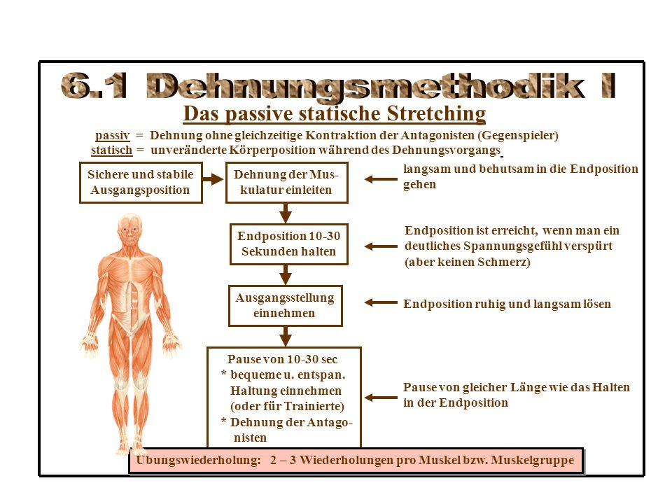 Das passive statische Stretching