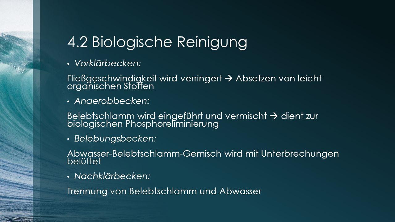 4.2 Biologische Reinigung