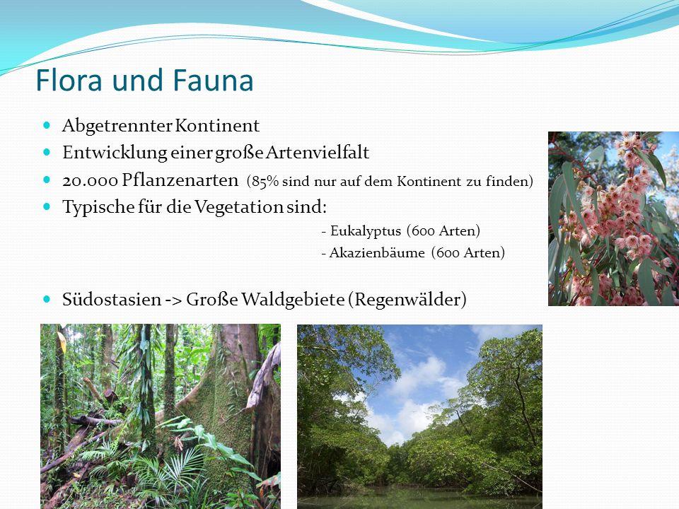 Flora und Fauna Abgetrennter Kontinent