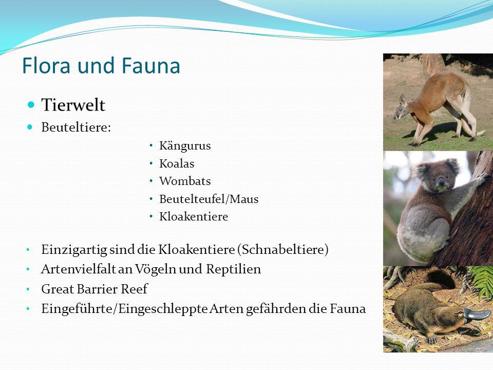Flora und Fauna Tierwelt Beuteltiere:
