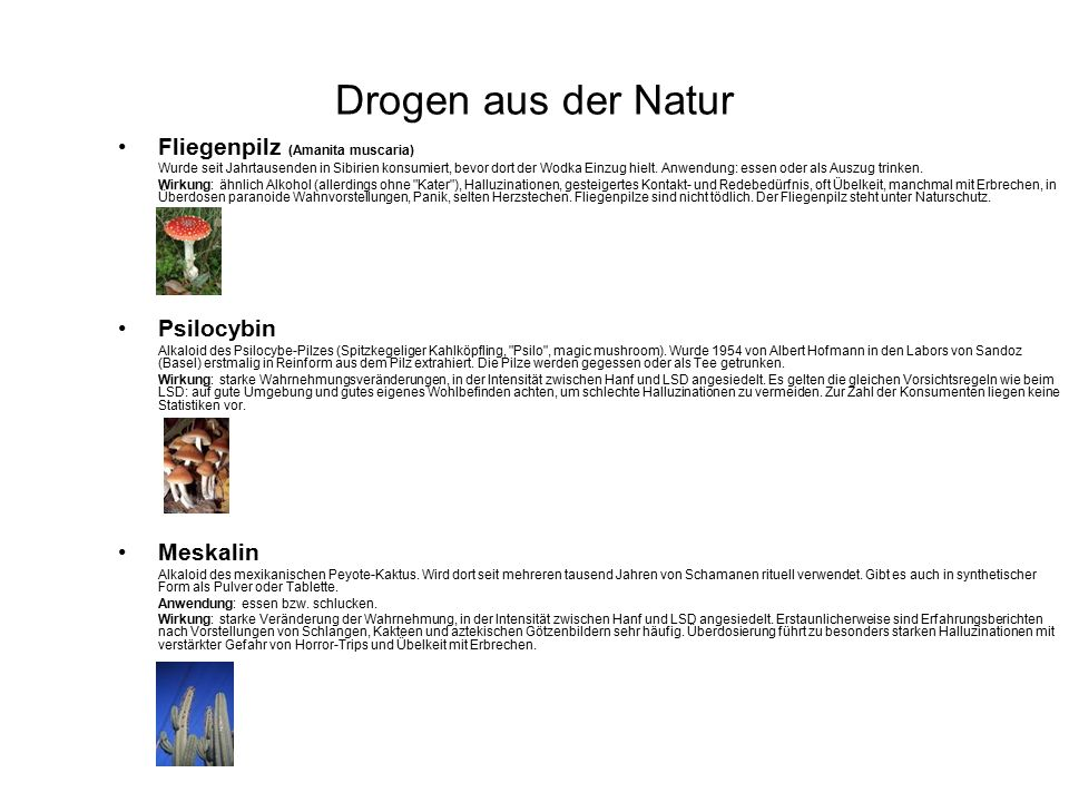 Drogen aus der Natur Fliegenpilz (Amanita muscaria) Psilocybin