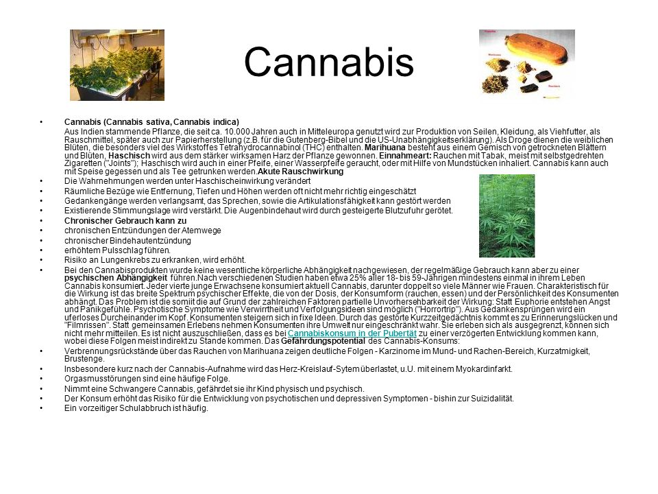 Cannabis Cannabis (Cannabis sativa, Cannabis indica)