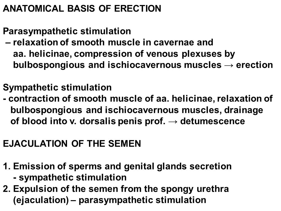 ANATOMICAL BASIS OF ERECTION