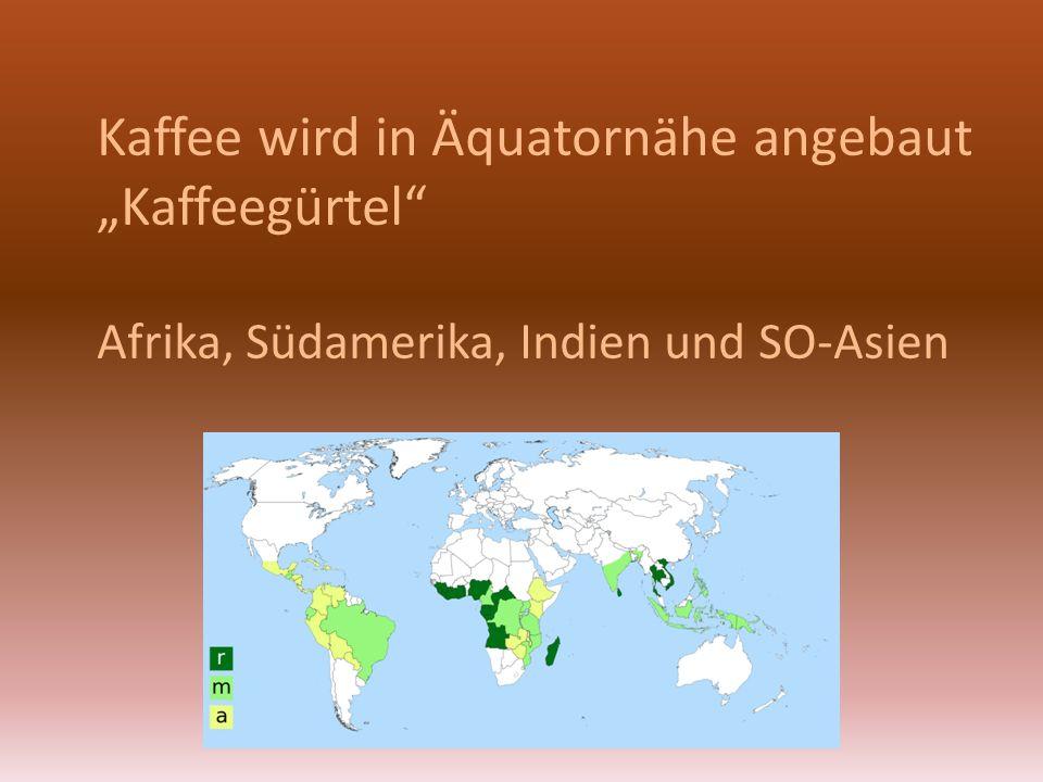 "Kaffee wird in Äquatornähe angebaut ""Kaffeegürtel"