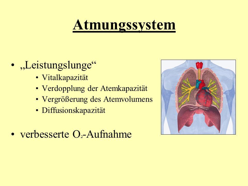 "Atmungssystem ""Leistungslunge verbesserte O²-Aufnahme Vitalkapazität"