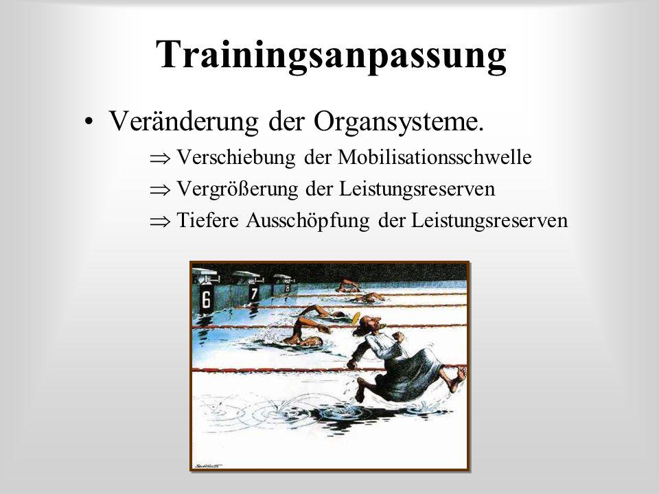 Trainingsanpassung Veränderung der Organsysteme.