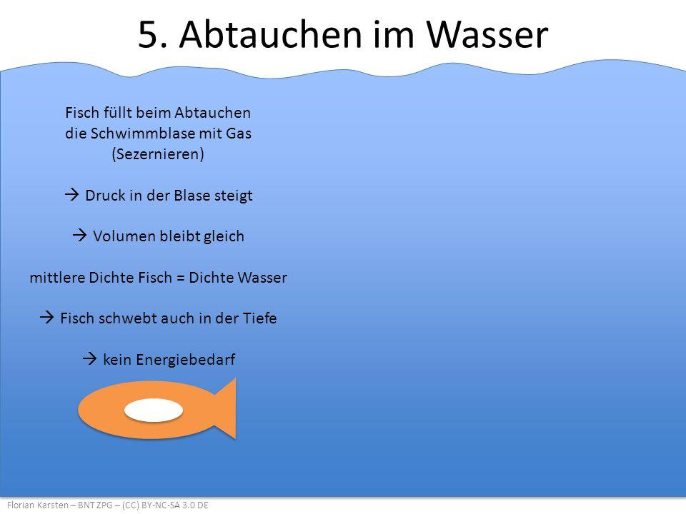 5. Abtauchen im Wasser Fisch füllt beim Abtauchen die Schwimmblase mit Gas (Sezernieren) Druck in der Blase steigt.