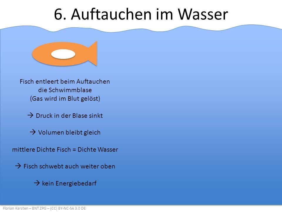 6. Auftauchen im Wasser Fisch entleert beim Auftauchen die Schwimmblase (Gas wird im Blut gelöst) Druck in der Blase sinkt.