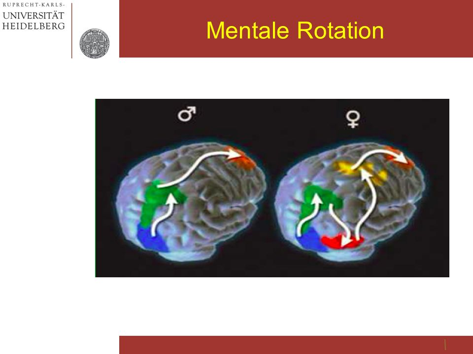 Mentale Rotation