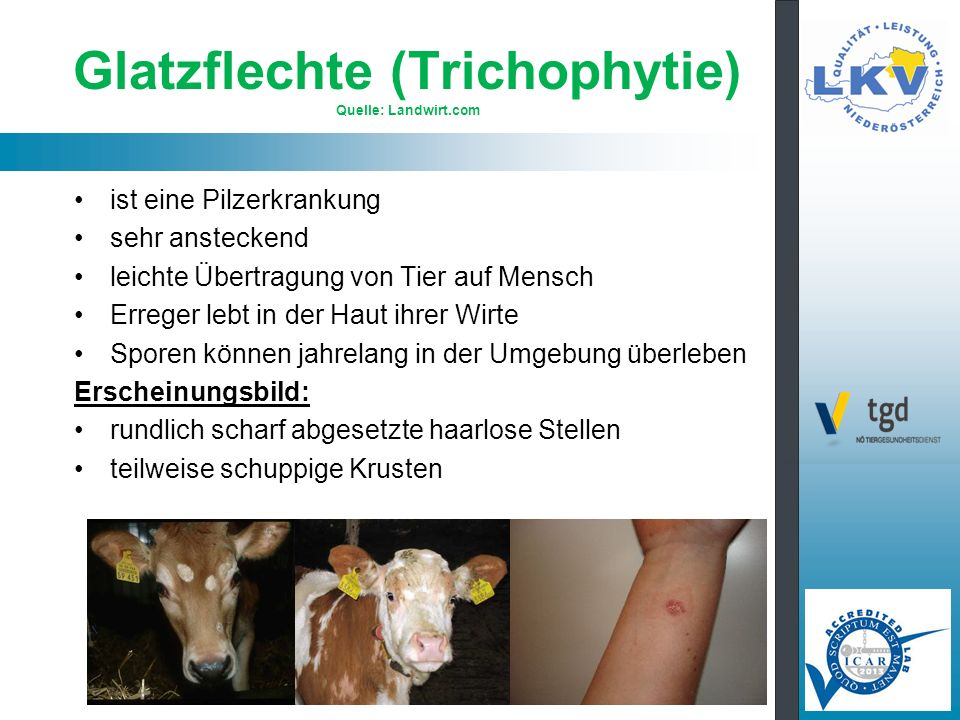 Glatzflechte (Trichophytie) Quelle: Landwirt.com