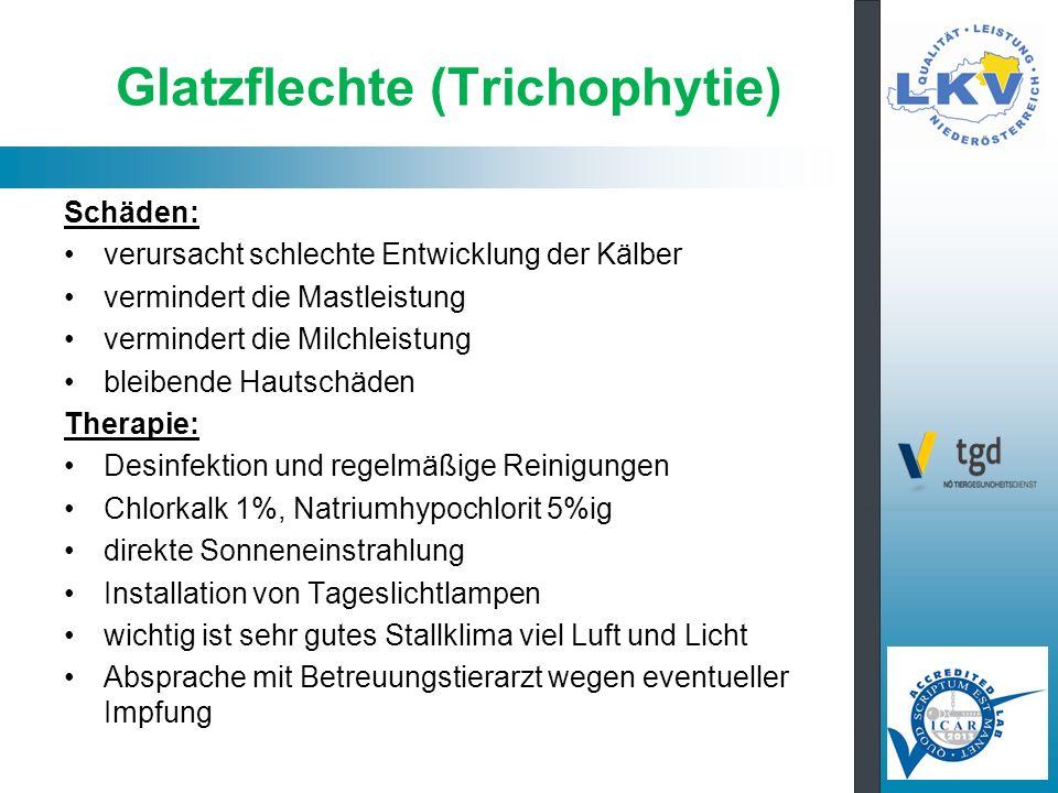 Glatzflechte (Trichophytie)