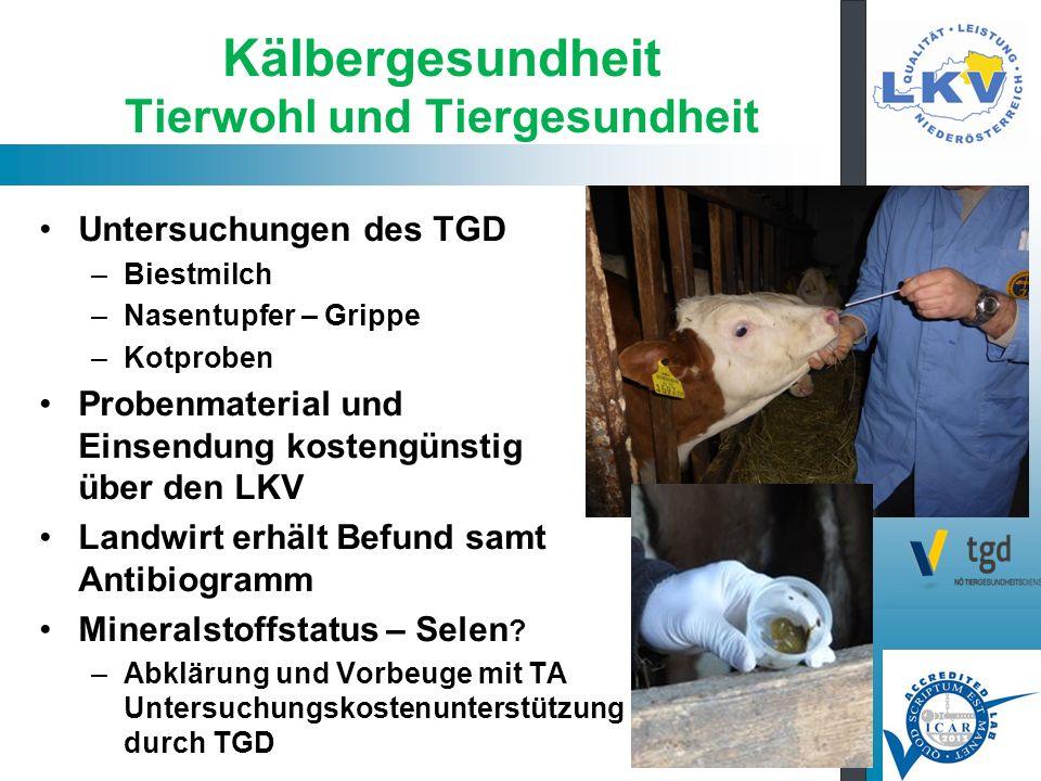 Kälbergesundheit Tierwohl und Tiergesundheit