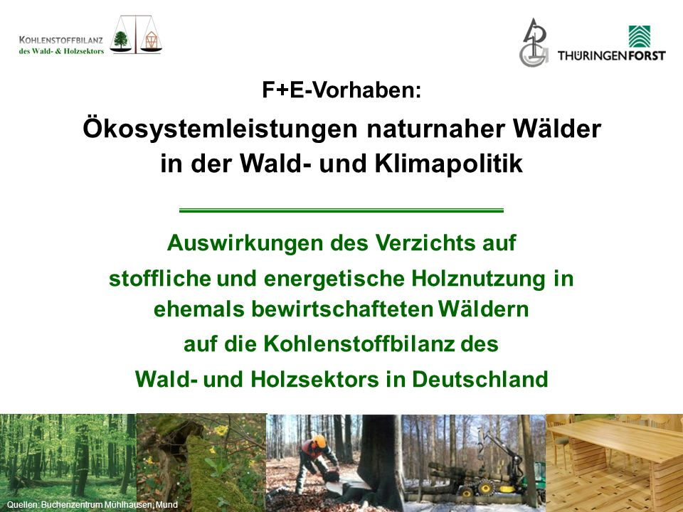 Ökosystemleistungen naturnaher Wälder in der Wald- und Klimapolitik